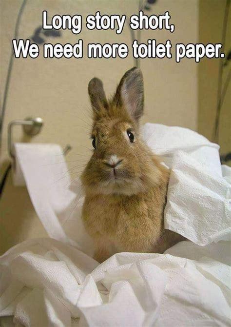 Bunny Memes - rabbit ramblings funny bunny memes cotton tail pinterest toilets funny bunnies and sorry