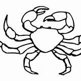Crab Fiddler Coloring 300px 99kb sketch template
