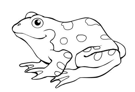 frog template animal templates  premium templates