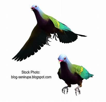 Burung Gambar Resolution Related