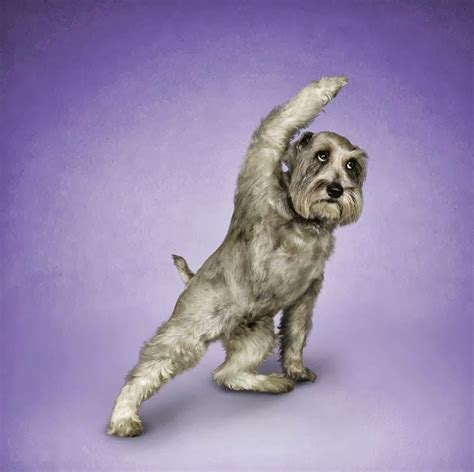 funny animal yoga poses images  pinterest funny