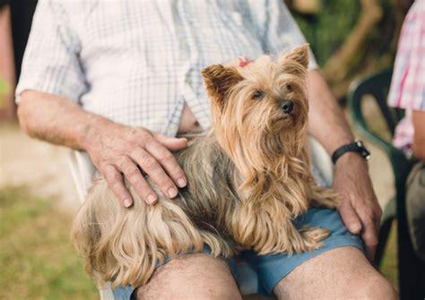 companion dog breeds iheartdogscom