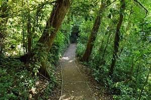 Costa Rican Rainforest - Gorgeous! | Favorite Places ...