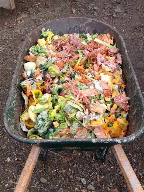 food scraps  feed  composting