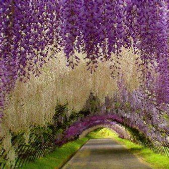 Fotos De Los Jardines Mas Bellos Del Mundo  Buscar Con