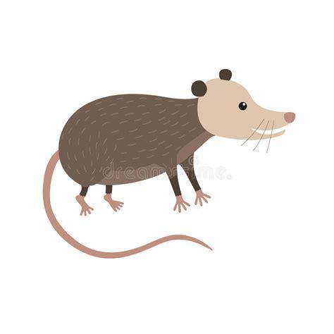 opossum clipart clipart illustration of opossum stock