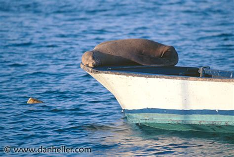 Sea Lion Boats by Sea Lion On Boat