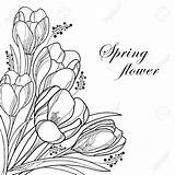 Corner Flower Drawing Crocus Outline Coloring Flowers Floral Spring Bouquet Vector Getdrawings Saffron Crocuses sketch template