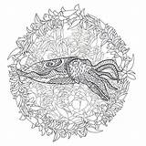 Cuttlefish Coloring Template Colourbox Sketch sketch template