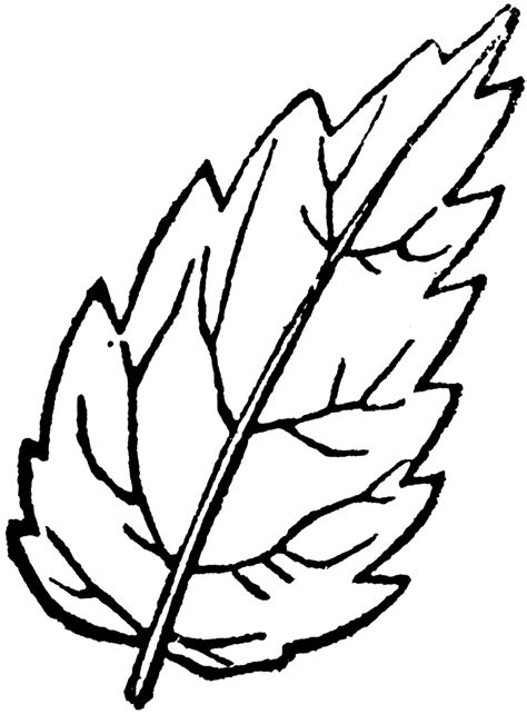 serrated leaf clipart