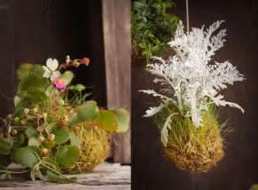 Hanging Moss Ball Plants