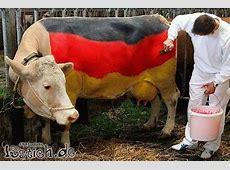 Deutsche Kuh Bild lustichde
