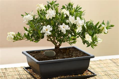 feng shui plants for office desk how to feng shui your office space petal talk