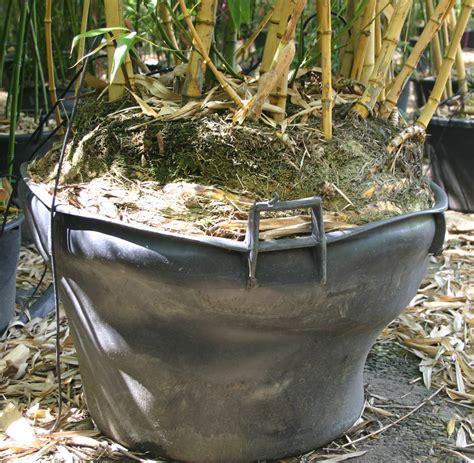 forme de pot 224 233 viter lesbambous fr forum des fous de bambous