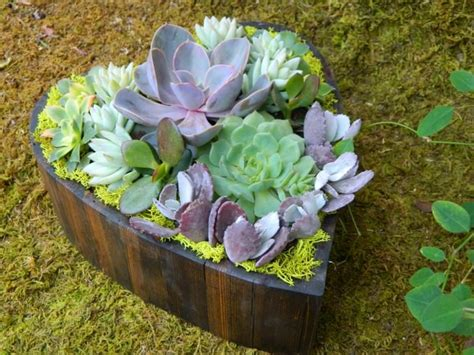 Succulent Heart For Valentine's Day • 1001 Gardens