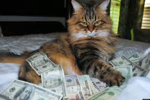 money cat cats photo and show flaunts hip trifecta of