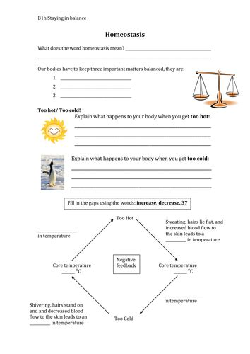 homeostasis worksheet  smcdonnell teaching resources
