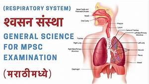 U0936 U094d U0935 U0938 U0928  U0938 U0902 U0938 U094d U0925 U093e  Respiratory System   U092e U0930 U093e U0920 U0940 U092e U0927 U094d U092f U0947 - General Science For Mpsc Examination