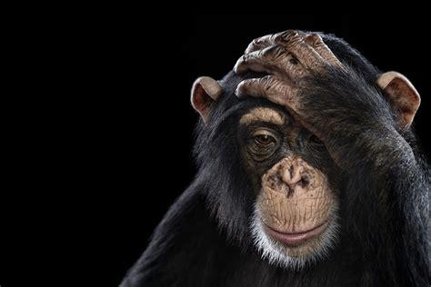 12096 professional photographs of animals studio portraits of animals by brad wilson