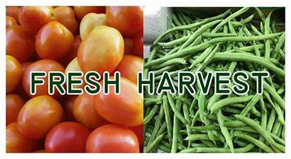 Palengke Alaska Vegetables Fruits
