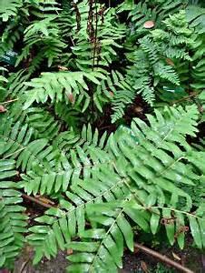 Plantes D Ombre Extérieur : les plantes pour un mur v g tal en ext rieur l 39 ombre ~ Melissatoandfro.com Idées de Décoration