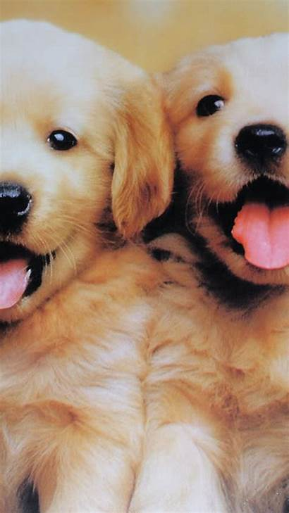 Puppy Dog Iphone Android Puppies Screen Lock