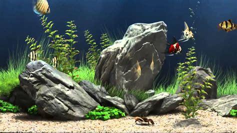 fish screensaver amazing graphics  fish