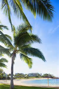 palm trees on the in ko olina park oahu hawaii photograph by inti st clair