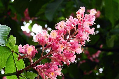 fiori di bach in menopausa chestnut fiori di bach in menopausa menopausa