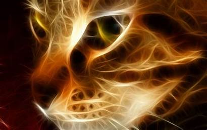 Cool Cat Backgrounds Wallpapers Fire Animals