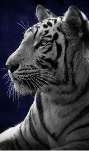Download Free Mobile Phone Wallpaper White Tiger - 789 ...