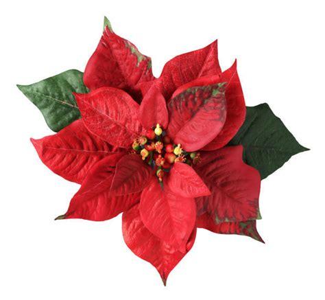 ten      christmas flower favorite