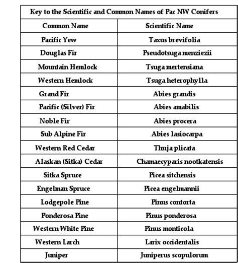 scientific  google search scientific names pinterest