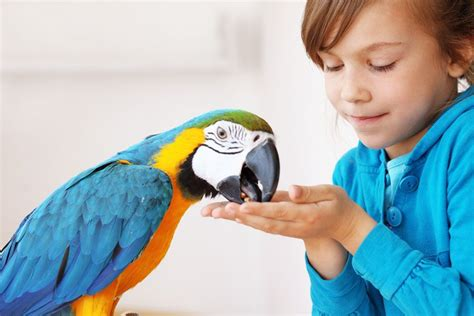 pet parrot how to train your hand reared pet parrot pets4homes