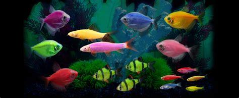 GloFish® - Experience the Glo!®