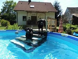 Hunde Pool Bauen : 13 best into the swimming pool 2017 images on pinterest pools swimming pools and swiming pool ~ Frokenaadalensverden.com Haus und Dekorationen