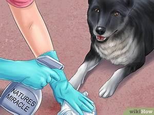 Klärgrube Geruch Beseitigen : geruch von hundeurin beseitigen wikihow ~ Whattoseeinmadrid.com Haus und Dekorationen
