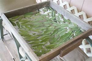 Salbei Einfrieren Oder Trocknen : salbei ernten alles ber das trocknen einfrieren und konservieren plantura ~ Orissabook.com Haus und Dekorationen