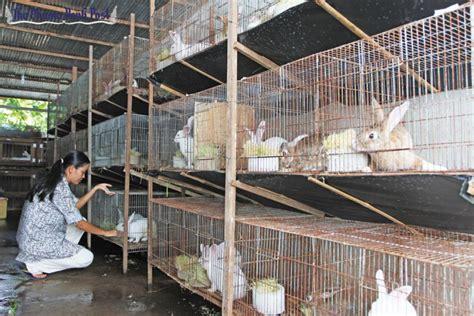 bunnies burrow    hearts  saucepans phnom
