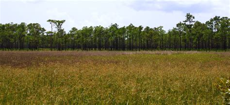 babcock webb flatwoods wildlife area management pine hydric wetlands guide