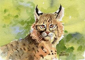 Bobcat – our small North American Wildcat » Watercolors by ...