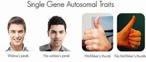 3. 11: Mendelian Inheritance in Humans - Biology LibreTexts