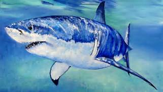 Great White Shark Speed Painting - YouTube  Great White Shark Painting