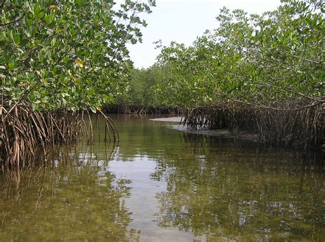 experts develop africas highest quality mangrove maps