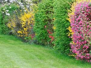 Quand Tailler Les Arbustes De Haies : planter une haie pour d limiter un jardin maison jardin ~ Dode.kayakingforconservation.com Idées de Décoration