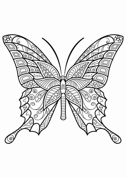 Butterfly Coloring Pages Adult Adults