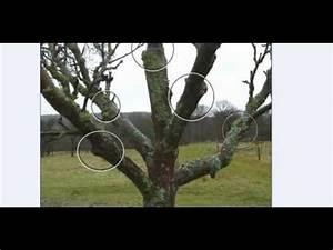 Kirschbaum Richtig Schneiden : das pfropfen 1 youtube ~ Lizthompson.info Haus und Dekorationen