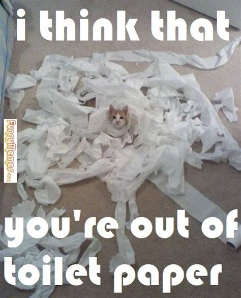 Newspaper Cat Meme - 34 best images about funny memes on pinterest cats dog houses and meme center