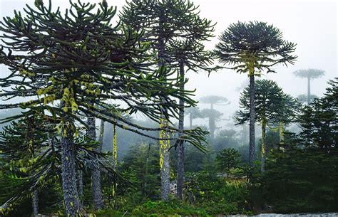 angol parque nacional nahuelbuta