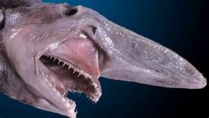 The Terrifying Goblin Shark Inspired the New 'Alien ...
